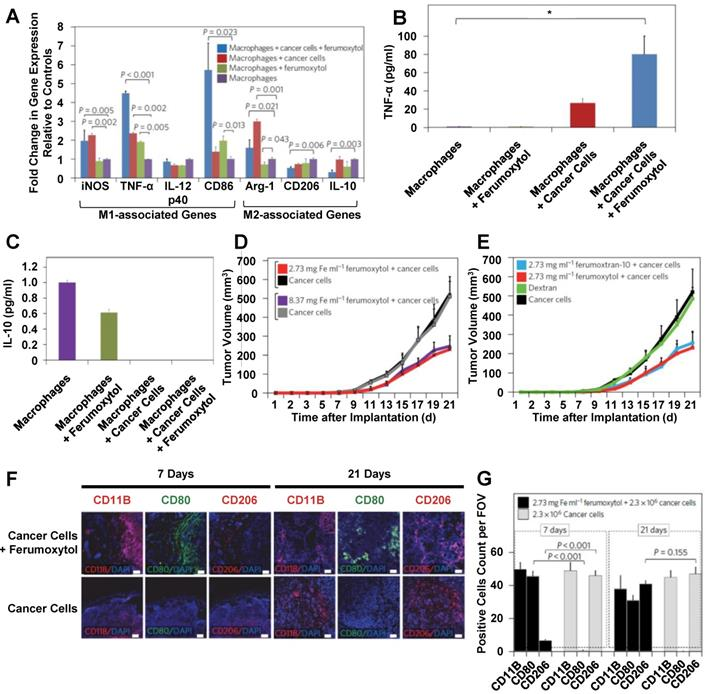Biological Effects of Nanoparticles on Macrophage